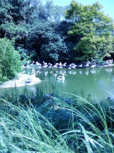 s'extasier devant les flamands rose du parc de la tête d'or (lyon)